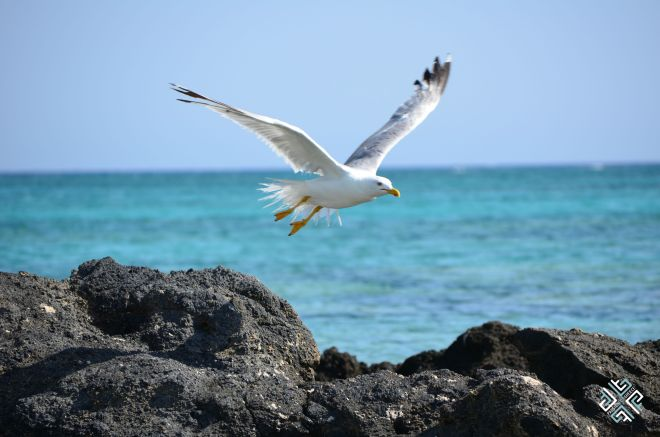 passionforgreece_elafonisi_bird